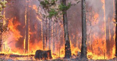Штраф за разведение костра в 2019 году: в лесу и на участке