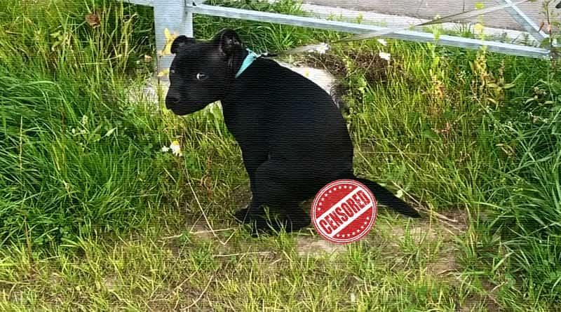 Штраф за выгул собак: без намордника и поводка по КоАП